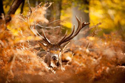 Jagd Deutschland